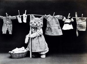 Kitten washing